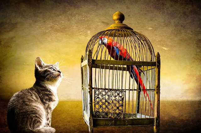 golden-cage